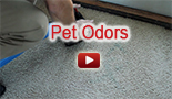 pet odors San Ramon Carpet Cleaning California